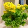 一束で二度美味しい/菜の花