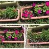 花を植えました🌸