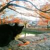 桜・紅葉で有名な三井寺観光のランチなら、「とんかつ棹」で決まりでしょ!