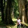 コスタリカ 巨木とシロアリ