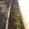 庭いじりの贅沢 ツルバラ、フキ、木蓮、芽吹きの季節
