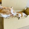 るるちゃん写真集vol. 16「晴れた日の段ボール猫さん」