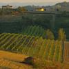 イタリアの陽光とワイン