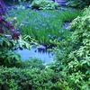 燕子花図と夏秋渓流図