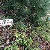 久しぶりの登山は快適な滋賀県の霊仙山その1