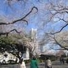 横浜西区掃部山公園桜(花見)開花状況2018年3月26日横浜西区ドットコム