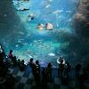 水族館の写真の撮り方。カメラ女子と新江ノ島水族館に行ってきた。