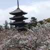 2021年 京都の桜をサイクリングで巡る4日間③