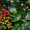 山岸コーヒー農園のブログが面白すぎる