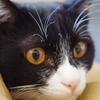 今日の黒猫モモ&白黒猫ナナの動画ー664