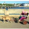 チベットの「犬葬」/犬の共感性とソラリスの海