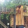 続編:木に支えられて。ツリーハウス。(札幌)