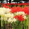 9月に咲く花