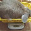 体重の行方