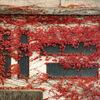 南禅寺船溜の周辺で見かけた蔦紅葉