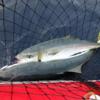 【 去年6.11のブリ釣り遠征一日目】 本日気温高し!風は強し!!【今日に釣り情報】チカが釣れてきたようです!