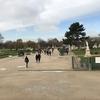 ロンドン・パリ旅行記 #16 パリ最終日 オランジュリー美術館の睡蓮を鑑賞