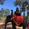 アンコールワット個人ツアー(184)アンコールワットで象さんに乗る!