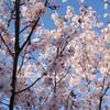 *【2人目】リプロ東京・ホルモン補充移植周期の通院日程*