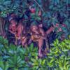 アマゾンの密林に暮らす原住民 今まで知られていなかった「新しい」部族が発見される