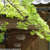 奈良、長谷寺の魅力再認識