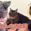 88歳にゃんこのお友達 88-year old cat friend