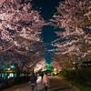 水戸は桜満開!昼と夜、2つの顔を撮ってみました