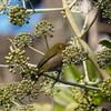 E-M1 新宿御苑の鳥達(メジロ、シジュウカラ、シロハラ、他)