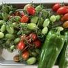 植物デストロイヤーの僕でも家庭菜園で収穫できたので紹介 野菜の成長記録