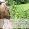 ハワイ島ハネムーン④・ワイピオ渓谷乗馬ツアー