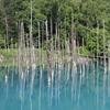 【青い池】美瑛にある神秘的な池!!美しい景色の青い池を訪れてみた!