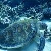 水深30mまで対応の防水デジカメ Nikon COOLPIX W300レビュー!ダイビングにも使えました!