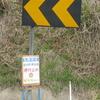 県道29号の黄色