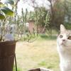 とある春の日の猫