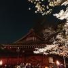 夜桜能 第三夜
