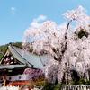山梨県・身延山久遠寺の枝垂れ桜のお花見♪