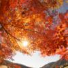 紅葉を見に丹沢へ