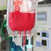 【動物の輸血治療について】