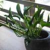 【自己紹介】私の好きな物はインテリア、植物。そして…