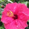 鴨川に夏の家族旅行~その2:太海フラワーセンター