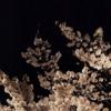 【フリーBGM素材】和風即興ピアノ『桜調』和-FANTASY
