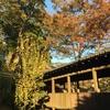 秋の中山まとめと昭和風画像