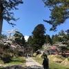 東北旅行 青森編②〜桜まつりのばかやろう〜