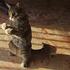 【猫パンチ動画】怒るのも可愛い。猫好きが送る殿堂ランキングTOP10。