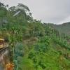 「台湾 阿里山森林鉄路」の車窓から~「嘉義駅」~「奮起湖駅」迄の風景