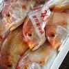 2020年5月9日 小浜漁港 お魚情報