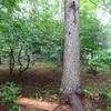 星野道夫と『旅をする木』再び