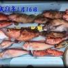 1月に日本海で釣れる魚👆 【  ボートゲーム / 釣魚のまとめページ  】 ※順次更新中