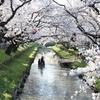 喜多院&新河岸川に桜を見に行ってきた!