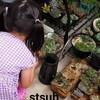 【多肉植物】ベランダが鉢でいっぱいなので寄せ植えでポットを減らそう!